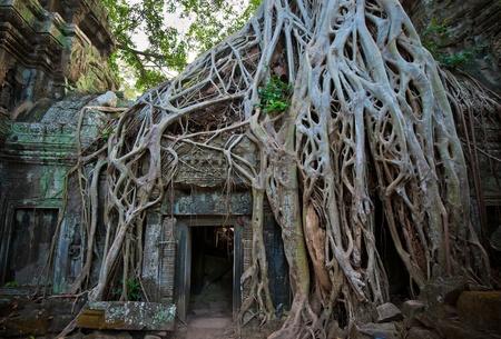 banyan: Ta Prohm, Angkor, Camboya