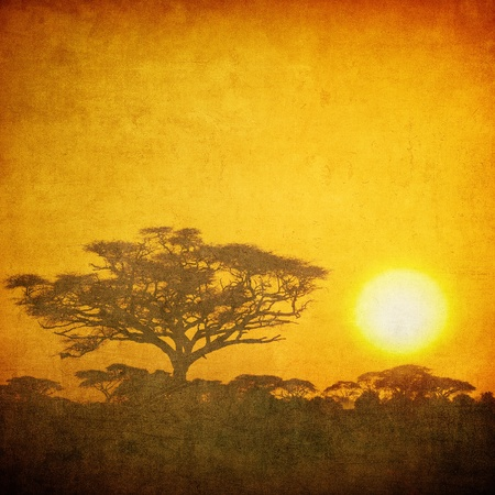 africa sunset: grunge image of a tree in savannah