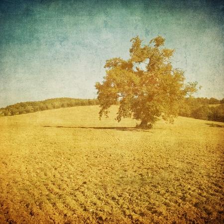 vintage tuscan landscape Stock Photo - 12084066