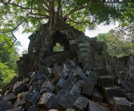 banyan tree: Ruins of Beng Mealea, Angkor, Cambodia