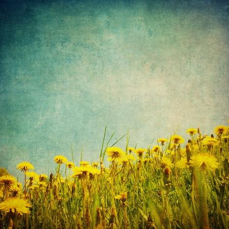 vintage image of dandelion field