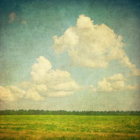 herbe ciel: l'image grunge d'un champ