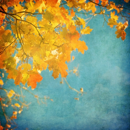 fall background: grunge background with autumn leaves