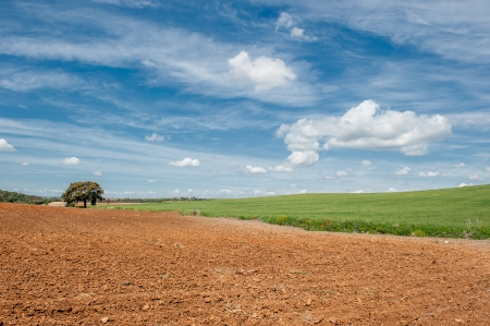 red soil: vibrant image of rural landscape Stock Photo