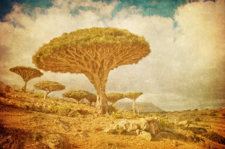 Vintage image of Dragon trees at Dixam plateau, Socotra Island, Yemen  photo