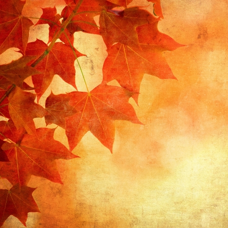 fall leaves border: grunge background with autumn leaves