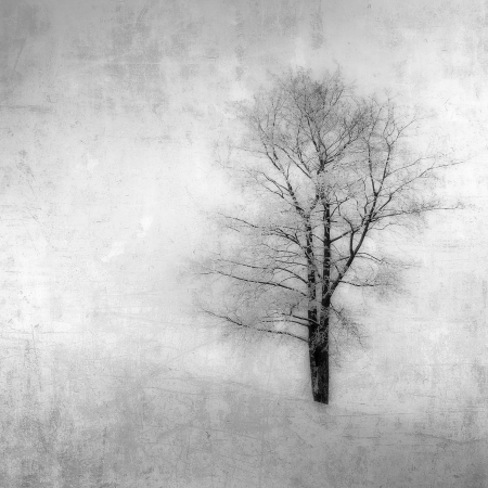 black and white: grunge image of a tree over vintage background