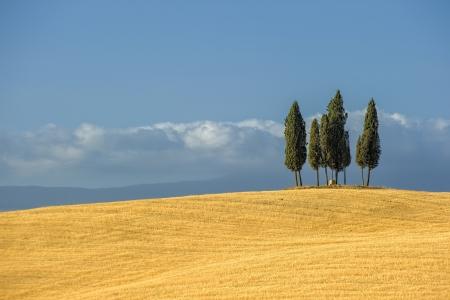 Bild der typischen toskanischen Landschaft
