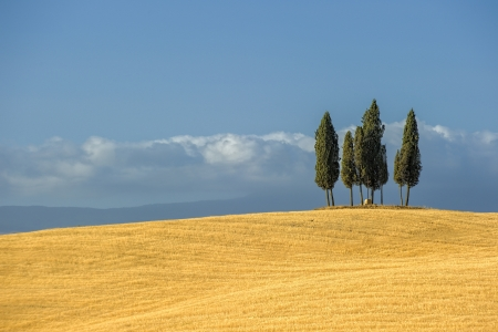 tuscany: image of typical tuscan landscape Stock Photo