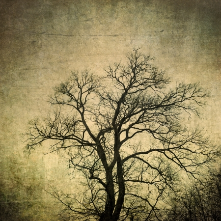 grunge frame with tree silhouettes photo