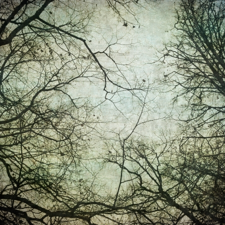 background grunge: grunge frame with tree silhouettes