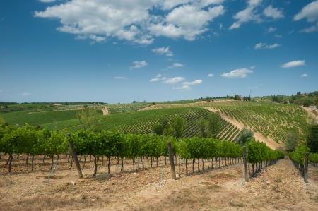 Vineyard in Chianti, Tuscany photo