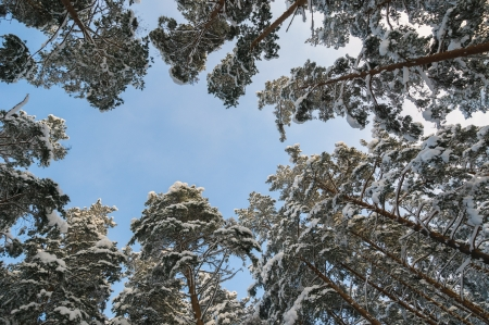thickets: winter forest