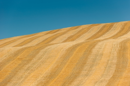 image of typical tuscan landscape Stock Photo - 17718132