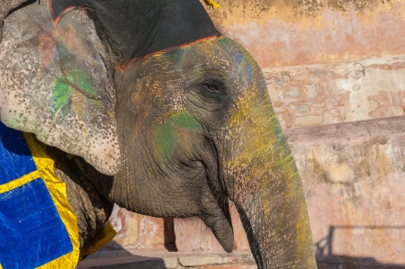 Colourful elephant in Jaipur, Rajasthan, India photo