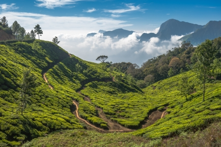 Tea plantations in Munnar, Kerala, India Stock Photo