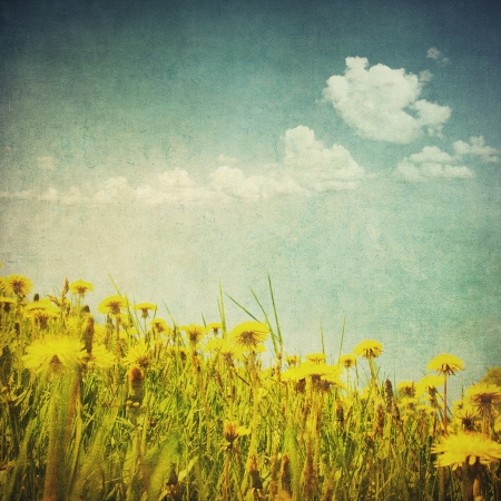 vintage image of dandelion field photo