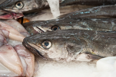 hake: fresh hake at a fish market Stock Photo
