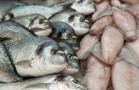 cooled: fresh fish at a fish market