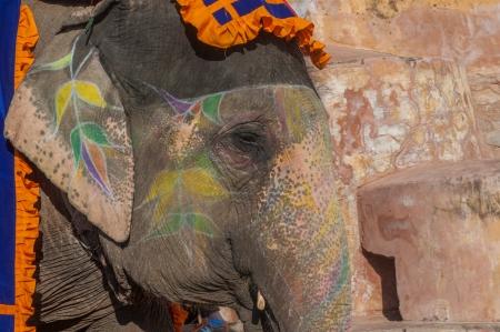 amber coloured: Colourful elephant in Jaipur, Rajasthan, India Stock Photo