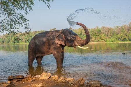 elefantes: Baño del elefante, Kerala, India