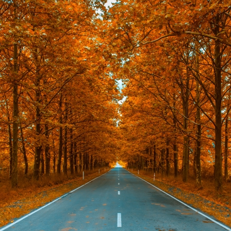 紅葉の路地