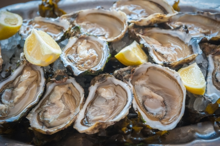 fresh oysters  Stock Photo - 21691547