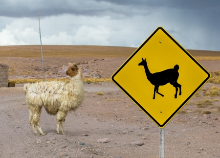 andean: Lama crossing traffic sign, Altiplano, Bolivia