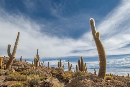 incahuasi: Incahuasi island, Salar de Uyuni, Bolivia