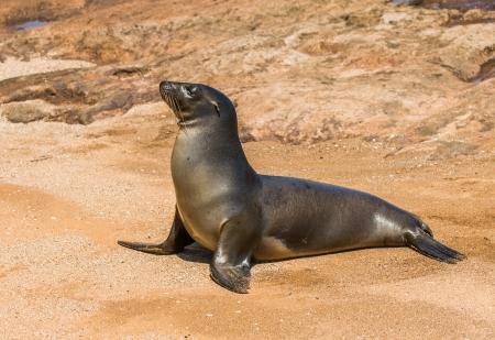 galapagos: Sea lion, Galapagos islands, Ecuador
