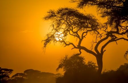 african sunset in savannah, kenya photo