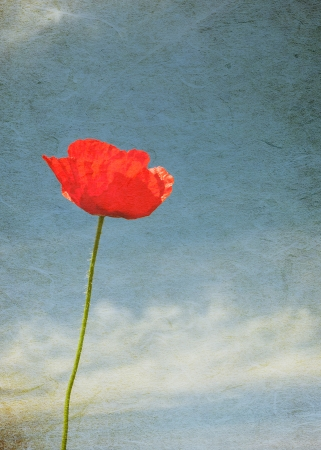 Vintage image of poppy photo