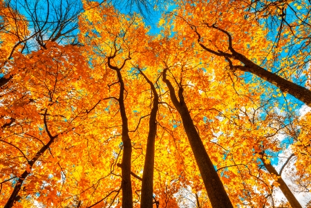 fall background: autunm trees