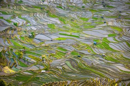 yuanyang: Rice terraces of Yuanyang, Yunnan, China