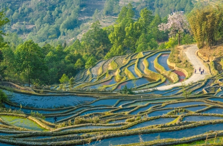 yuanyang: Rice terraces of Yuanyang, Yunnan, China