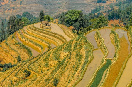 yuanyang: Rice terraces of Yuanyang in Yunnan, China Stock Photo