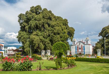 del: Arbol del Tule, a giant sacred tree in Tule, Oaxaca, Mexico Editorial