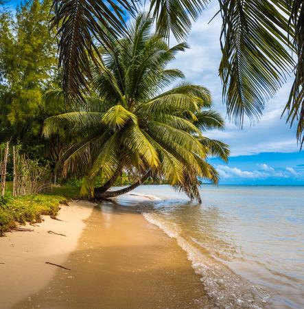 tropical island - sea, sky and palm trees photo