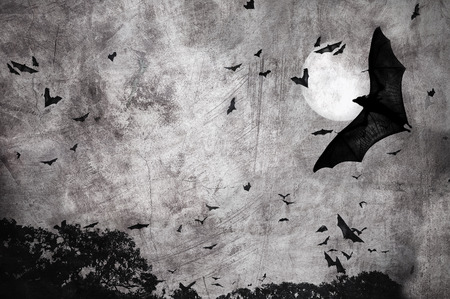 bats in the dark cloudy sky, perfect halloween background photo