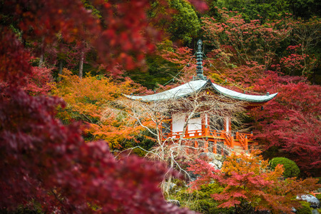 momiji: Daigoji temple in maple trees, momiji season, Kyoto, Japan