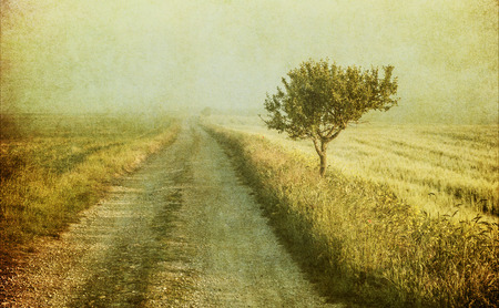 grunge image of a tree over vintage background photo