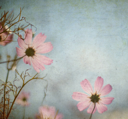 grunge floral background with space for text or image photo
