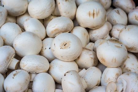 champignons: Fresh champignons in the market
