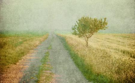 old tree: grunge image of a tree over vintage background