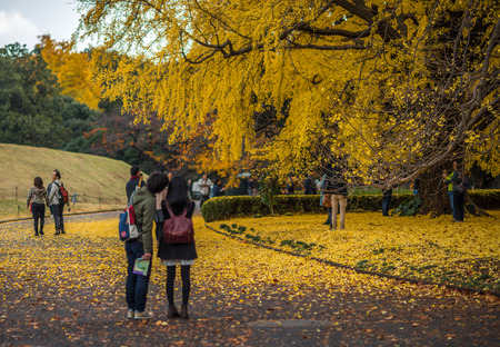 momiji: TOKYO, JAPAN - November, 30, 2014: Japanese tourists taking pictures of momiji maple trees Editorial