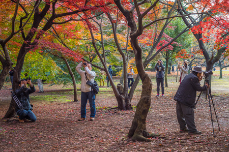 momiji: TOKYO, JAPAN - November, 30, 2014: Japanese tourists taking pictures of momiji maple trees Editorial