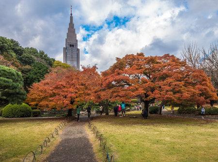 tokyo sky tree: Shinjuku Gyoen Park in autumn, Tokyo, Japan