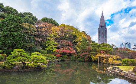 momiji: Shinjuku Gyoen Park in autumn Tokyo Japan