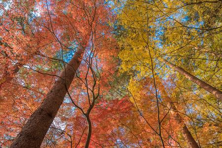 multi color: multi color trees in the autunm forest Stock Photo
