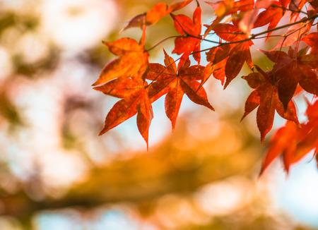 autumn leaves, very shallow focus Foto de archivo